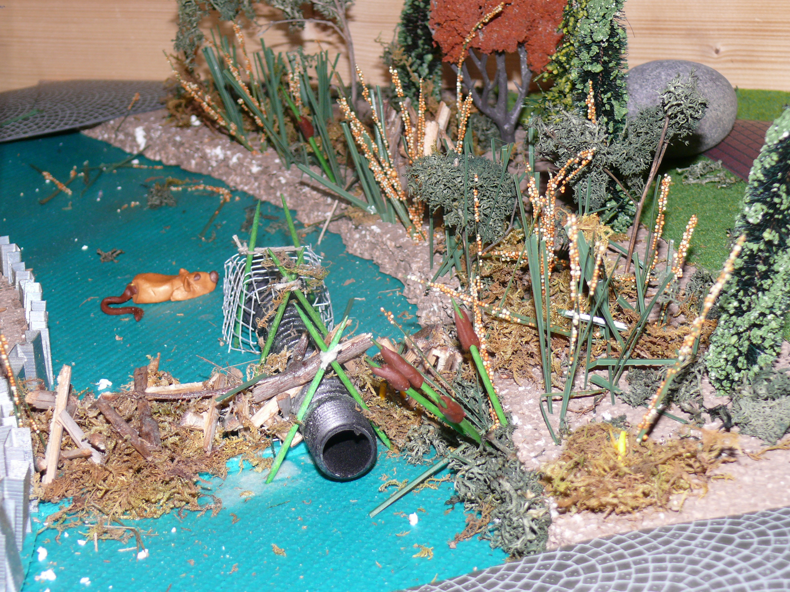 Pictures of Wetland Diorama http://www.martinezbeavers.org/wordpress/2009/04/12/