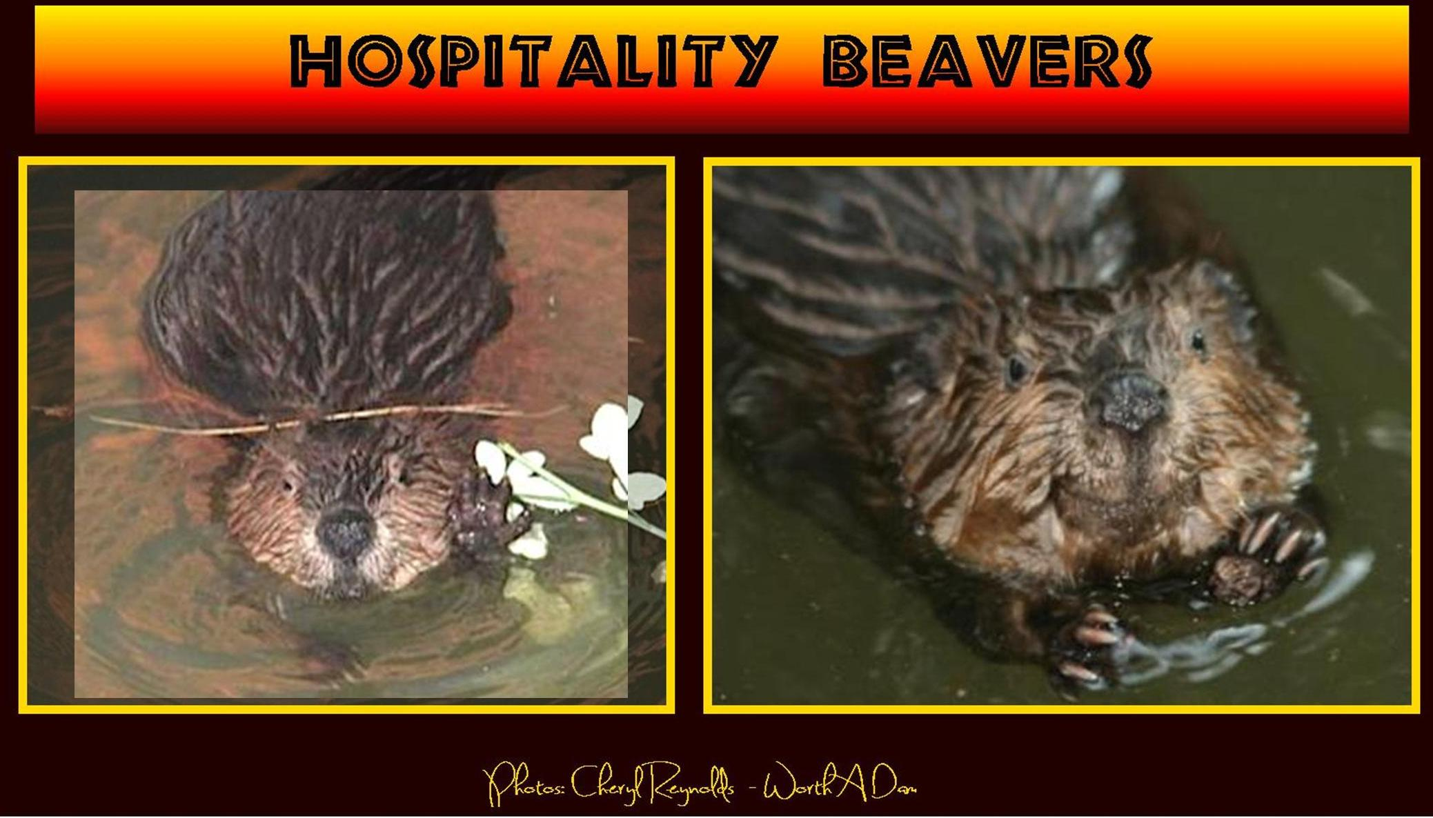 friendly beavers1