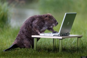 Beaver Uses Laptop