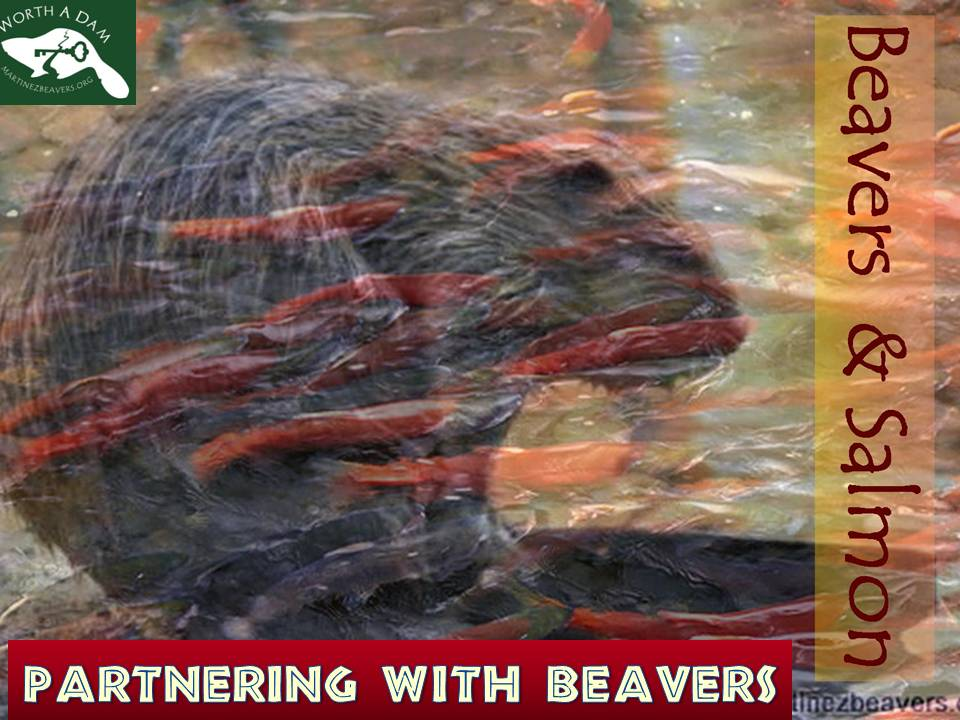 Partnering with Beavers
